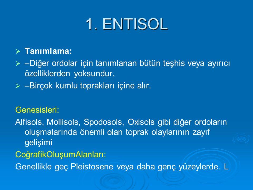 1. ENTISOL   Tanımlama:   –Diğer ordolar için tanımlanan bütün teşhis veya ayırıcı özelliklerden yoksundur.   –Birçok kumlu toprakları içine alı