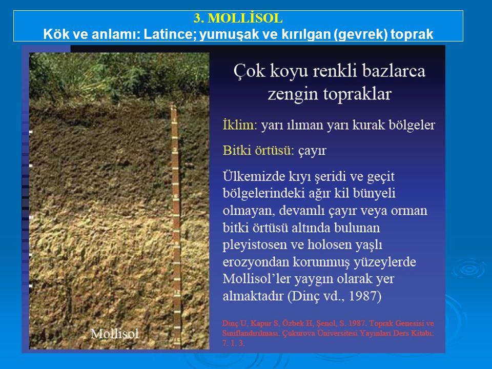 3. MOLLİSOL Kök ve anlamı: Latince; yumuşak ve kırılgan (gevrek) toprak