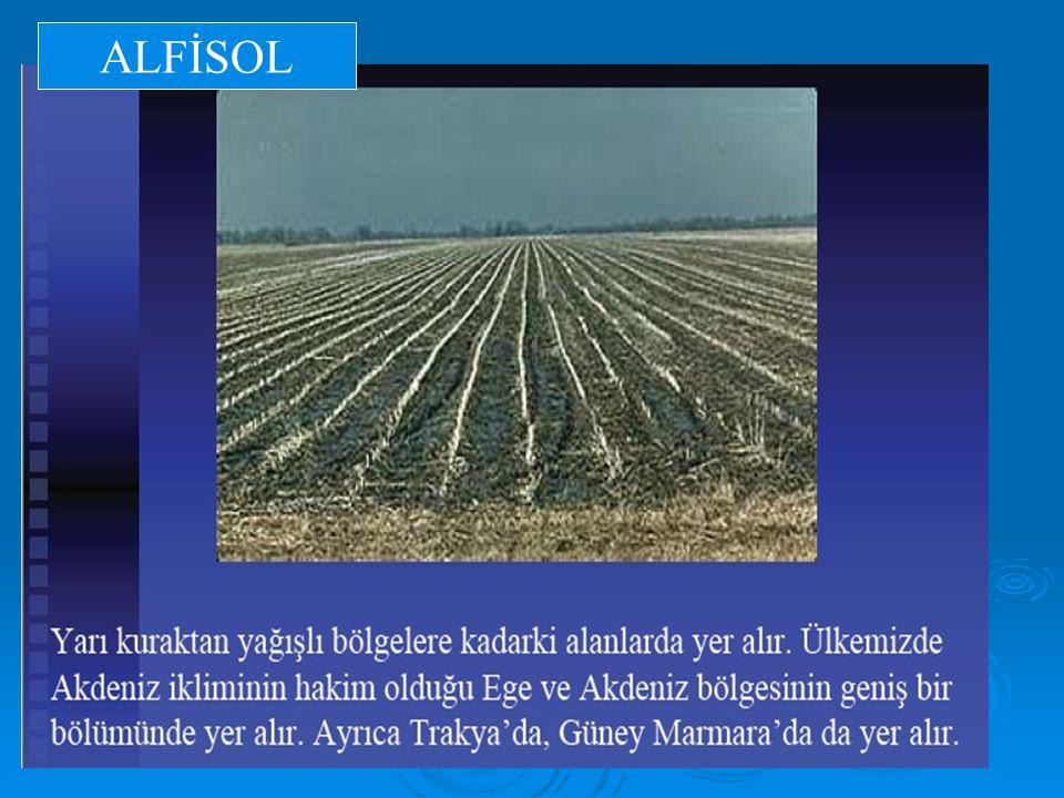 ALFİSOL