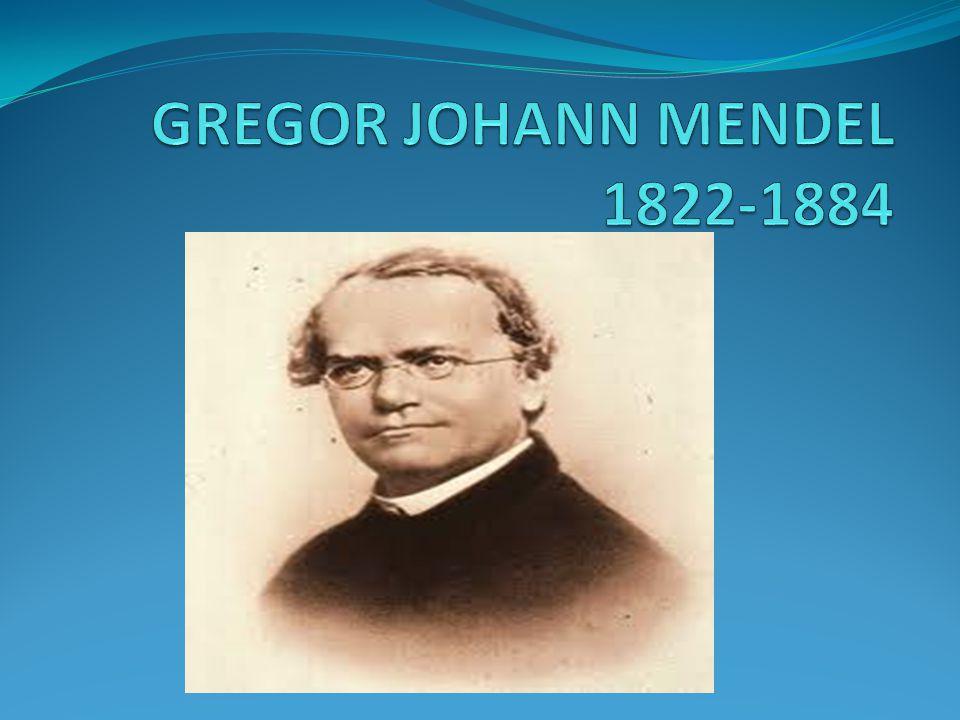 Johann Mendel 19.