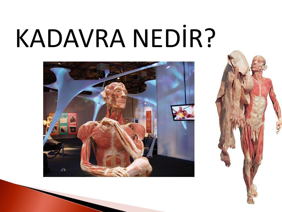 Kadavra özellikle tıpta anatomi derslerinde kullanılan cansız insan ya da hayvan bedenidir.