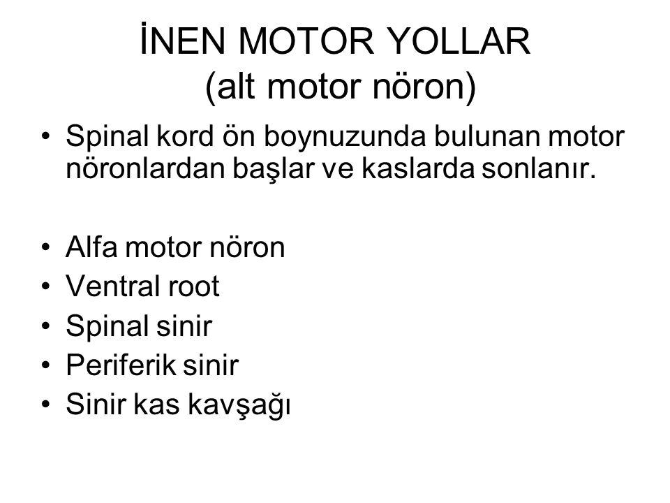 İNEN MOTOR YOLLAR (alt motor nöron) Spinal kord ön boynuzunda bulunan motor nöronlardan başlar ve kaslarda sonlanır.