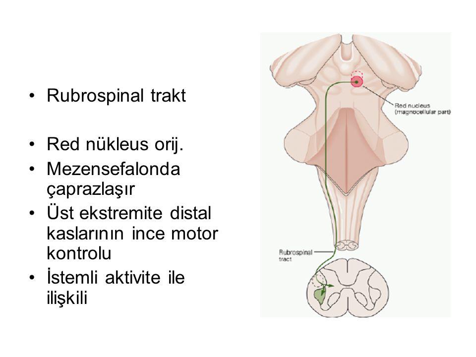 Rubrospinal trakt Red nükleus orij.