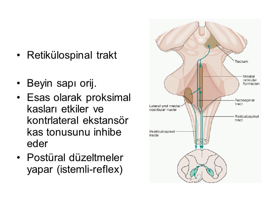 Retikülospinal trakt Beyin sapı orij.