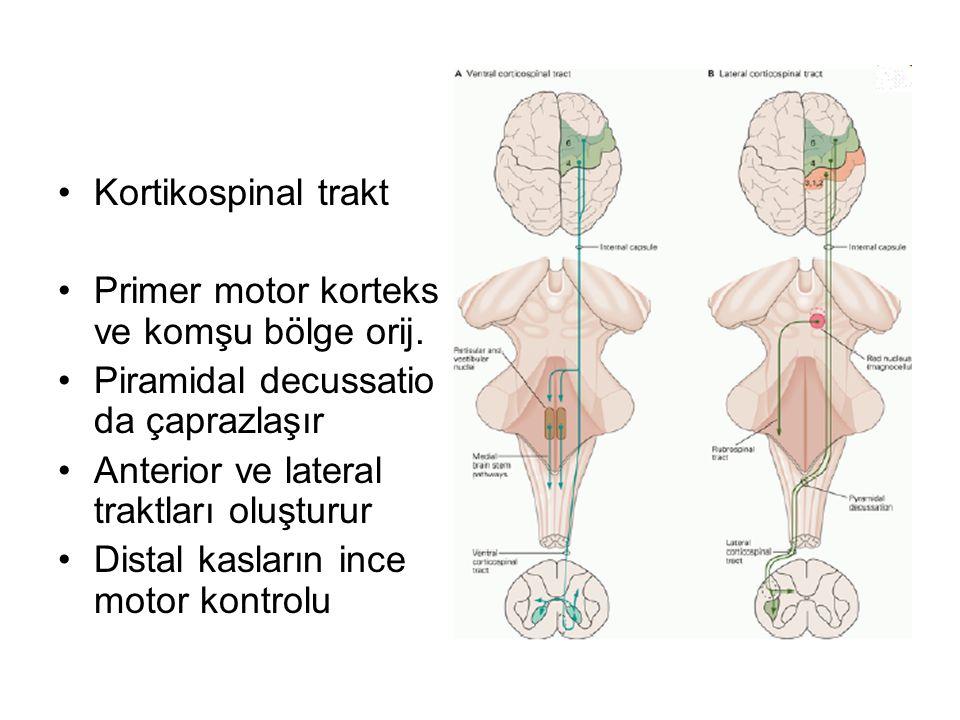 Kortikospinal trakt Primer motor korteks ve komşu bölge orij.