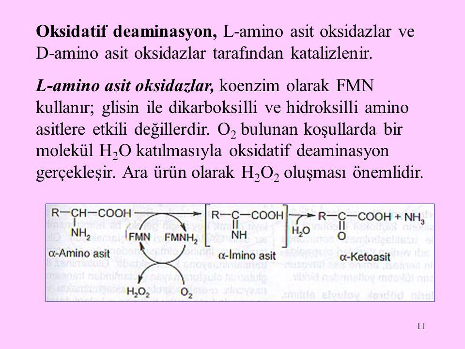 11 Oksidatif deaminasyon, L-amino asit oksidazlar ve D-amino asit oksidazlar tarafından katalizlenir. L-amino asit oksidazlar, koenzim olarak FMN kull