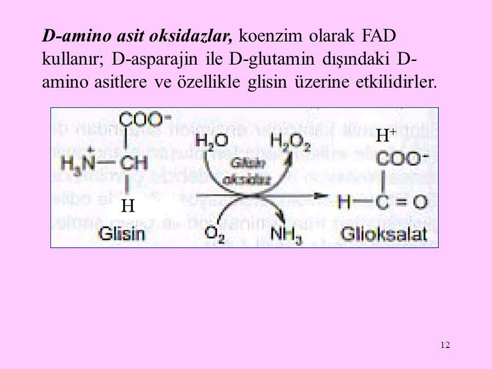 12 D-amino asit oksidazlar, koenzim olarak FAD kullanır; D-asparajin ile D-glutamin dışındaki D- amino asitlere ve özellikle glisin üzerine etkilidirl