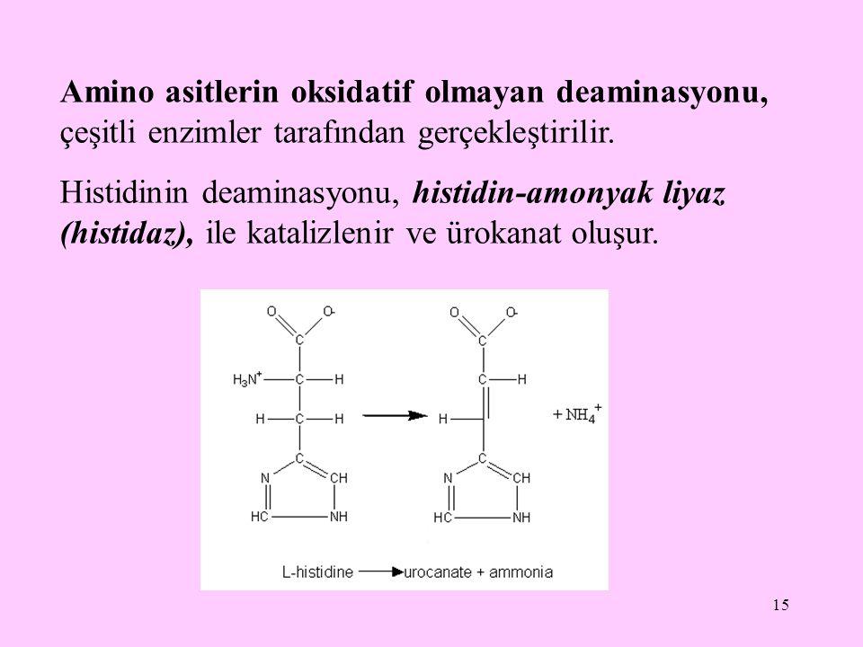 15 Amino asitlerin oksidatif olmayan deaminasyonu, çeşitli enzimler tarafından gerçekleştirilir. Histidinin deaminasyonu, histidin-amonyak liyaz (hist