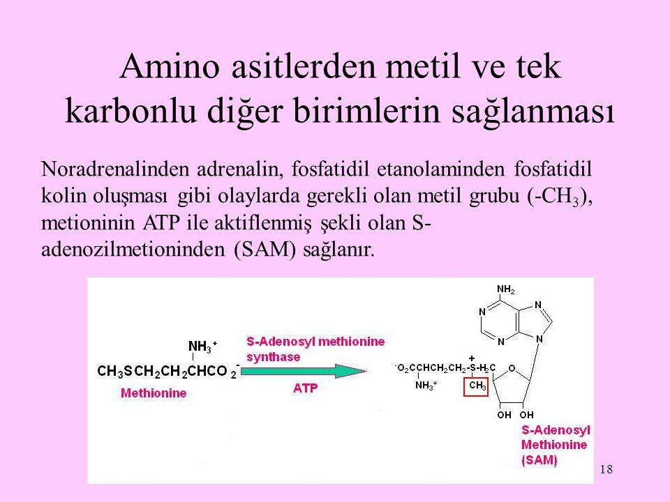 18 Amino asitlerden metil ve tek karbonlu diğer birimlerin sağlanması Noradrenalinden adrenalin, fosfatidil etanolaminden fosfatidil kolin oluşması gi