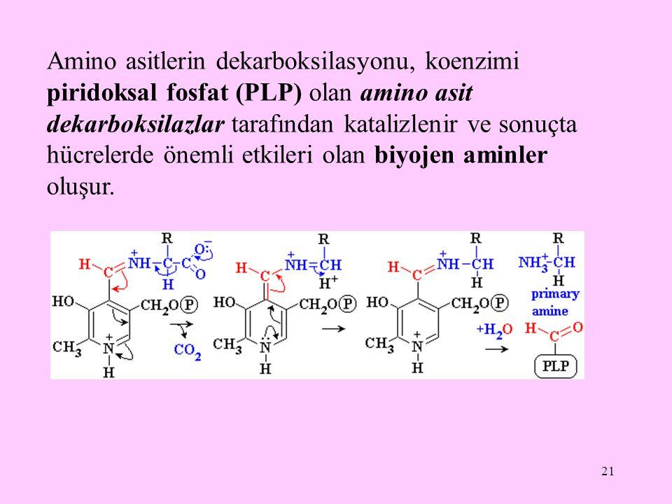 21 Amino asitlerin dekarboksilasyonu, koenzimi piridoksal fosfat (PLP) olan amino asit dekarboksilazlar tarafından katalizlenir ve sonuçta hücrelerde