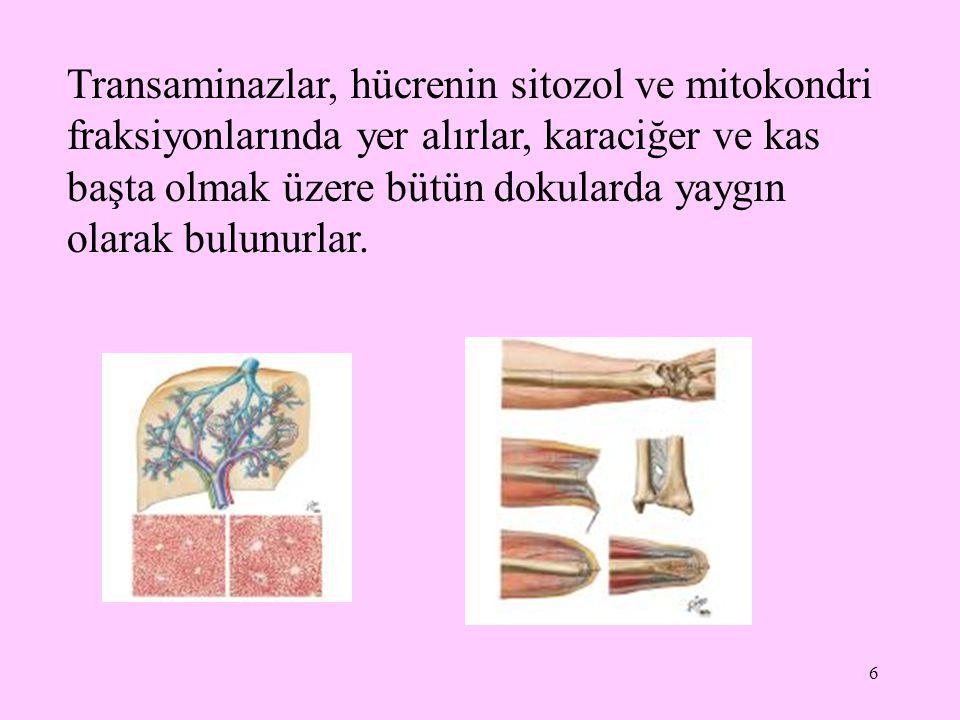 6 Transaminazlar, hücrenin sitozol ve mitokondri fraksiyonlarında yer alırlar, karaciğer ve kas başta olmak üzere bütün dokularda yaygın olarak bulunu