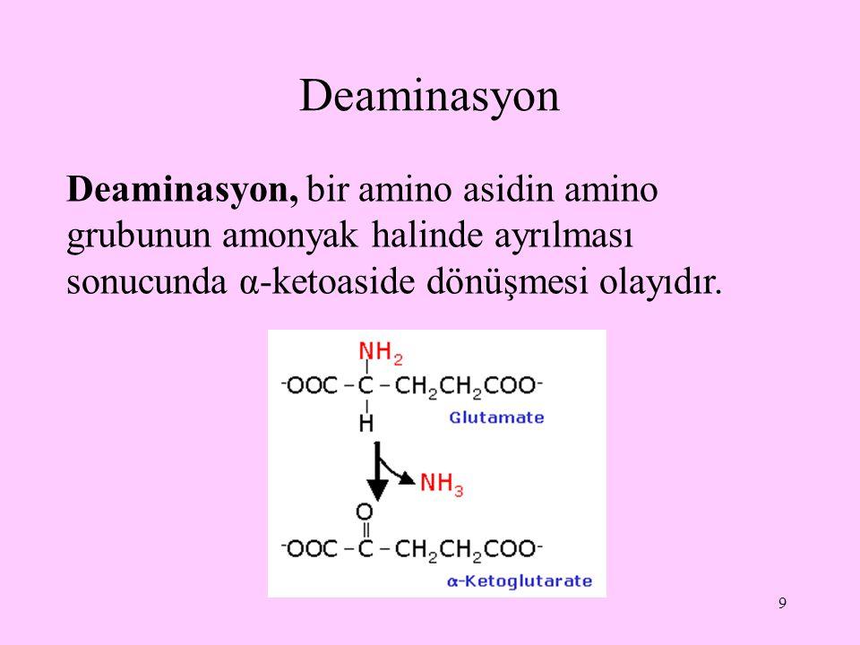 10 Deaminasyon olayları, oksidatif ve oksidatif olmayan olarak iki gruba ayrılır; başlıca karaciğer ve böbrekte bulunan çeşitli enzim ve koenzimlerin etkisiyle gerçekleşir.