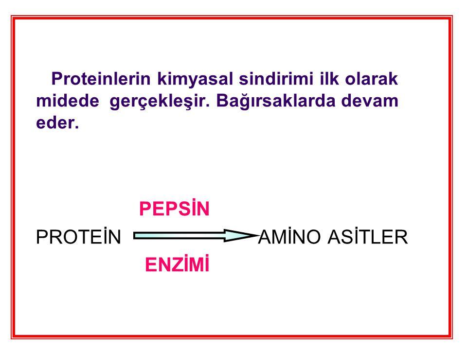 Proteinlerin kimyasal sindirimi ilk olarak midede gerçekleşir.