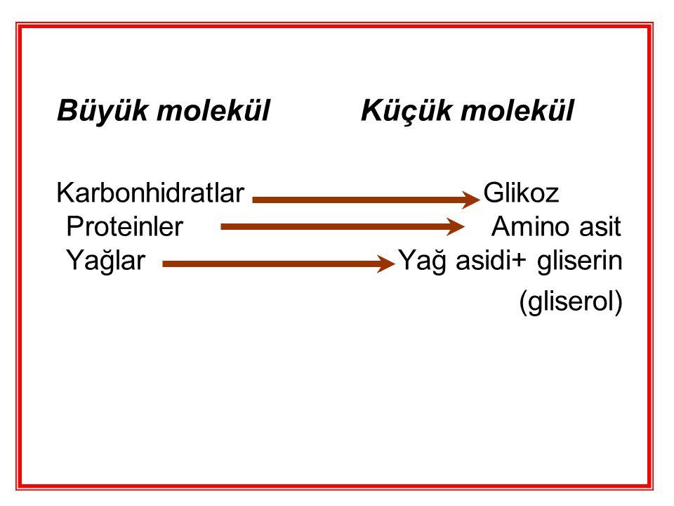 Büyük molekül Küçük molekül Karbonhidratlar Glikoz Proteinler Amino asit Yağlar Yağ asidi+ gliserin (gliserol)