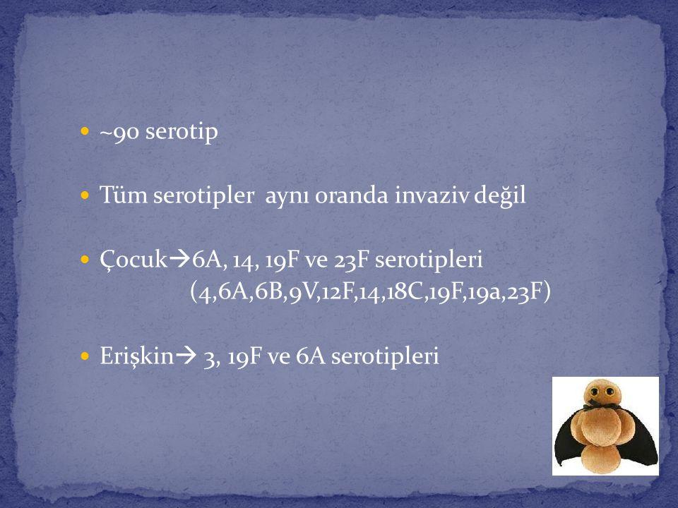 ~90 serotip Tüm serotipler aynı oranda invaziv değil Çocuk  6A, 14, 19F ve 23F serotipleri (4,6A,6B,9V,12F,14,18C,19F,19a,23F) Erişkin  3, 19F ve 6A
