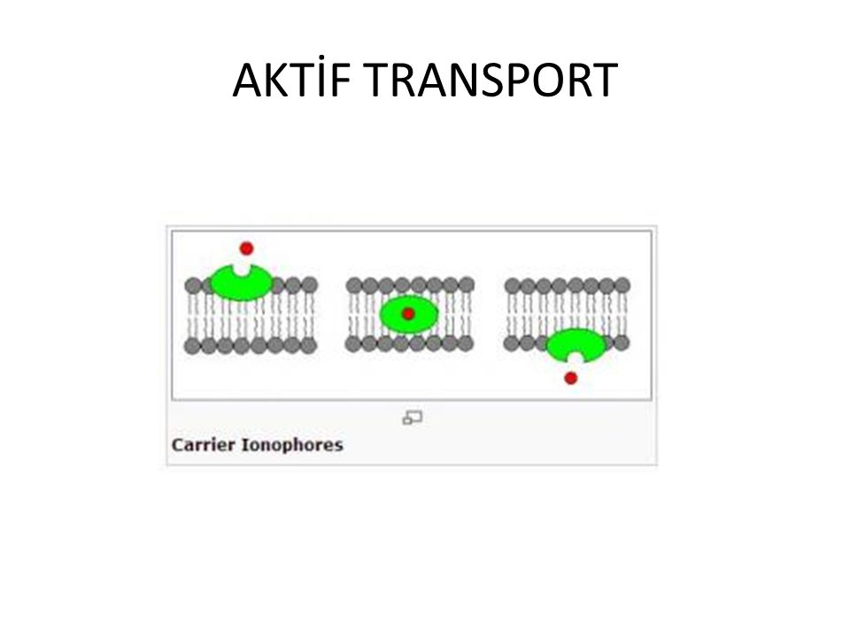 AKTİF TRANSPORT