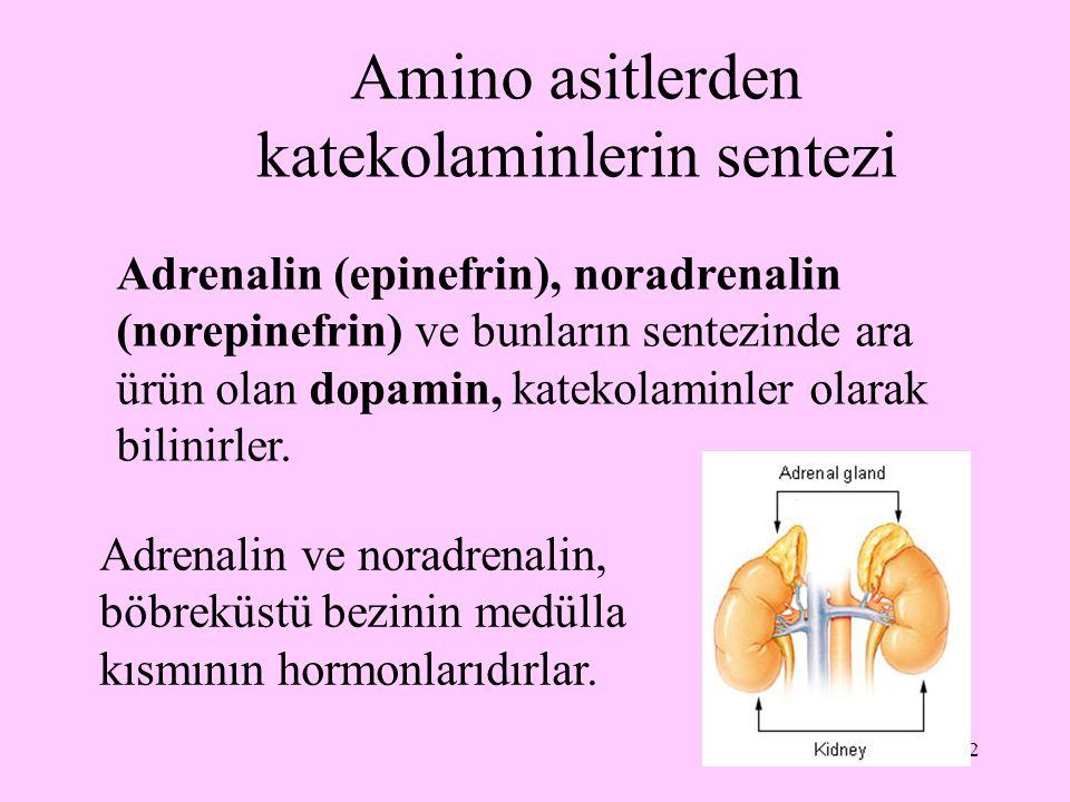 2 Amino asitlerden katekolaminlerin sentezi Adrenalin (epinefrin), noradrenalin (norepinefrin) ve bunların sentezinde ara ürün olan dopamin, katekolam