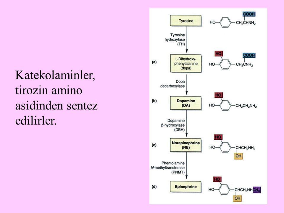 4 Katekolaminler, tirozin amino asidinden sentez edilirler.