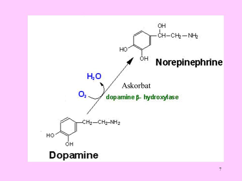 18 4 karbonlu oksaloasetat veren amino asitler