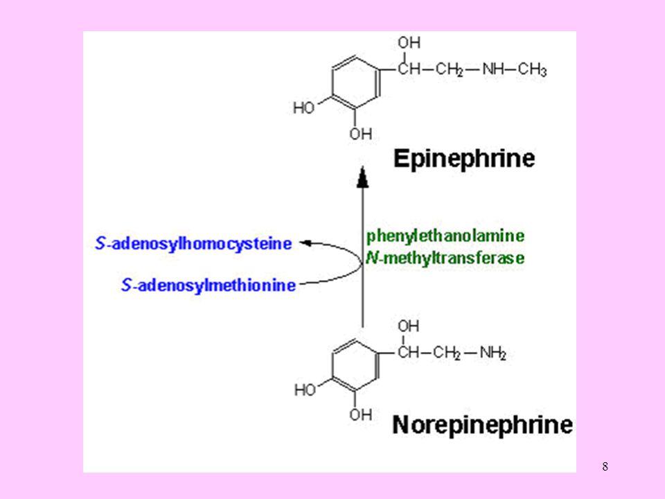 9 Katekolaminler, monoaminoksidaz (MAO) ve katekol- O-metil transferaz (COMT) enzimleri etkisiyle idrarla atılan inaktif metabolitlerine dönüşürler.