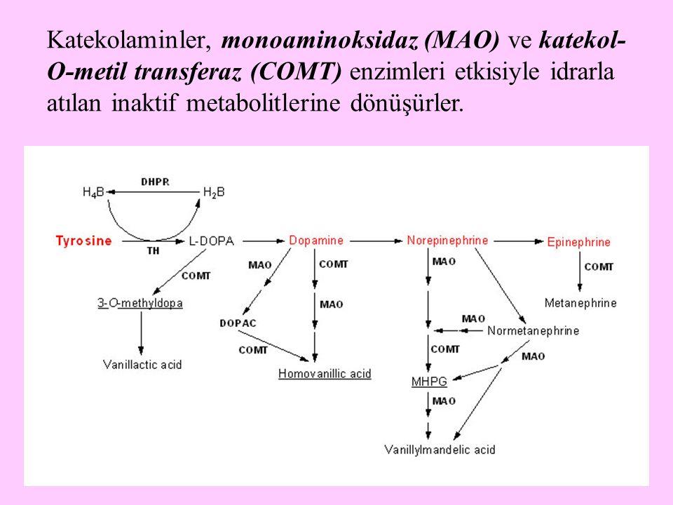 20 Süksinil-KoA veren amino asitler