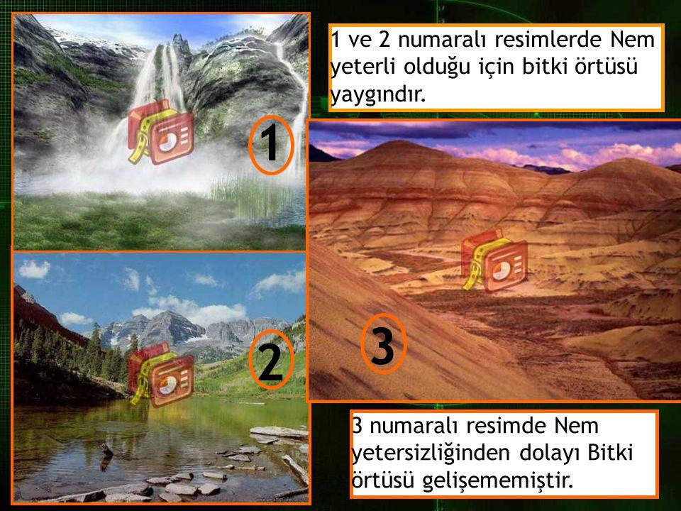 1 2 3 1 ve 2 numaralı resimlerde Nem yeterli olduğu için bitki örtüsü yaygındır. 3 numaralı resimde Nem yetersizliğinden dolayı Bitki örtüsü gelişemem
