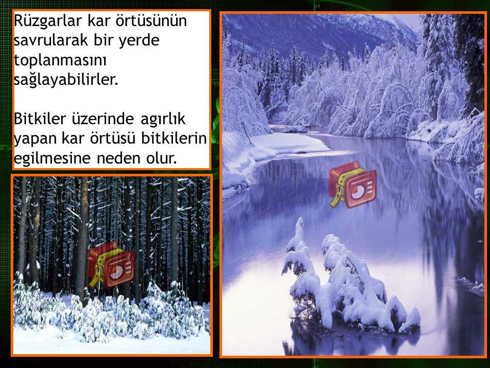 Rüzgarlar kar örtüsünün savrularak bir yerde toplanmasını sağlayabilirler. Bitkiler üzerinde agırlık yapan kar örtüsü bitkilerin egilmesine neden olur