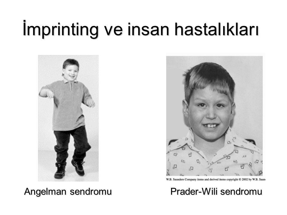 İmprinting ve insan hastalıkları Angelman sendromu Prader-Wili sendromu