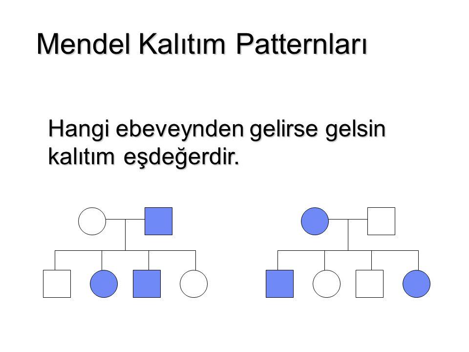 Heteroplasmi ve replikatif segregasyon