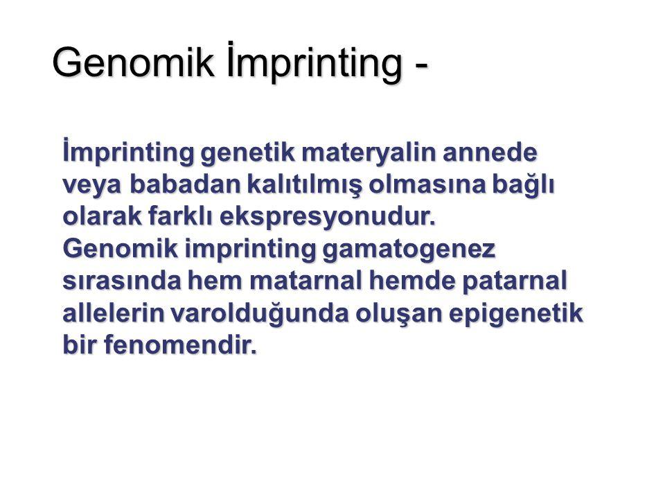 Genomik İmprinting - İmprinting genetik materyalin annede veya babadan kalıtılmış olmasına bağlı olarak farklı ekspresyonudur. Genomik imprinting gama