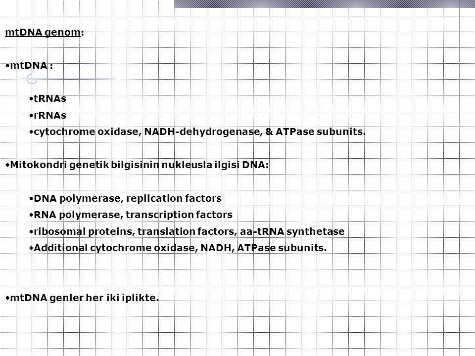 mtDNA genom: mtDNA : tRNAs rRNAs cytochrome oxidase, NADH-dehydrogenase, & ATPase subunits. Mitokondri genetik bilgisinin nukleusla ilgisi DNA: DNA po