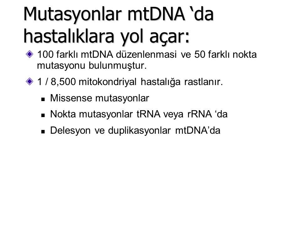 100 farklı mtDNA düzenlenmasi ve 50 farklı nokta mutasyonu bulunmuştur. 1 / 8,500 mitokondriyal hastalığa rastlanır. Missense mutasyonlar Nokta mutasy