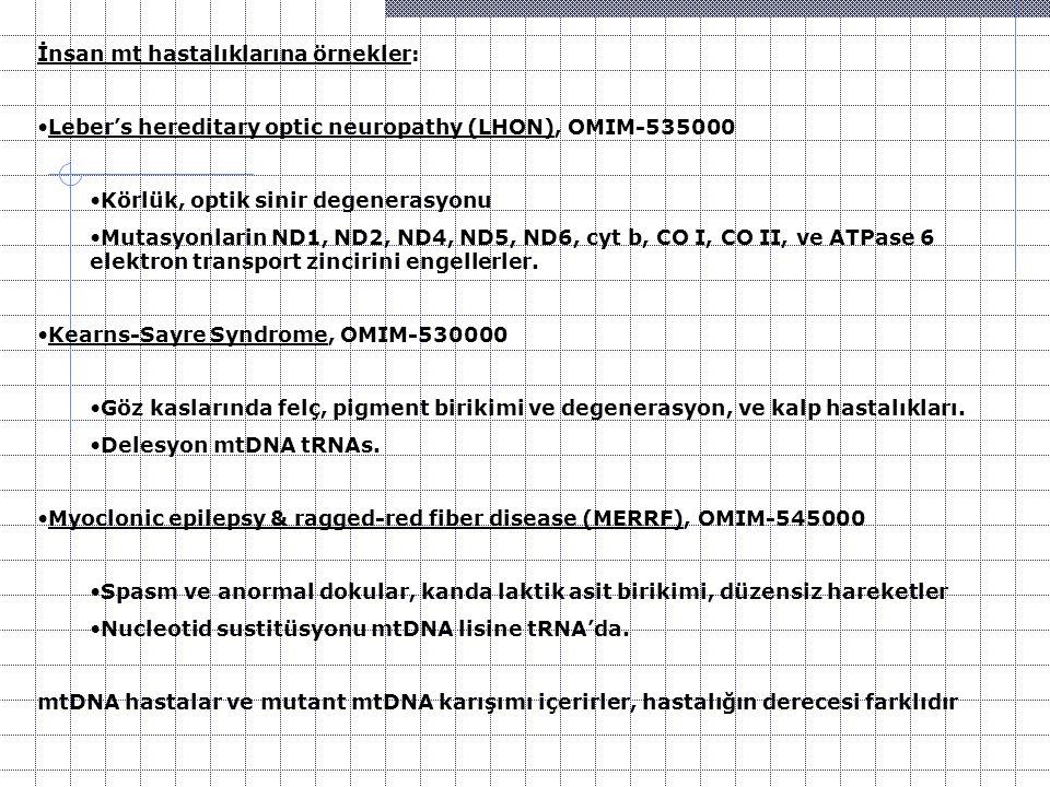 İnsan mt hastalıklarına örnekler: Leber's hereditary optic neuropathy (LHON), OMIM-535000 Körlük, optik sinir degenerasyonu Mutasyonlarin ND1, ND2, ND