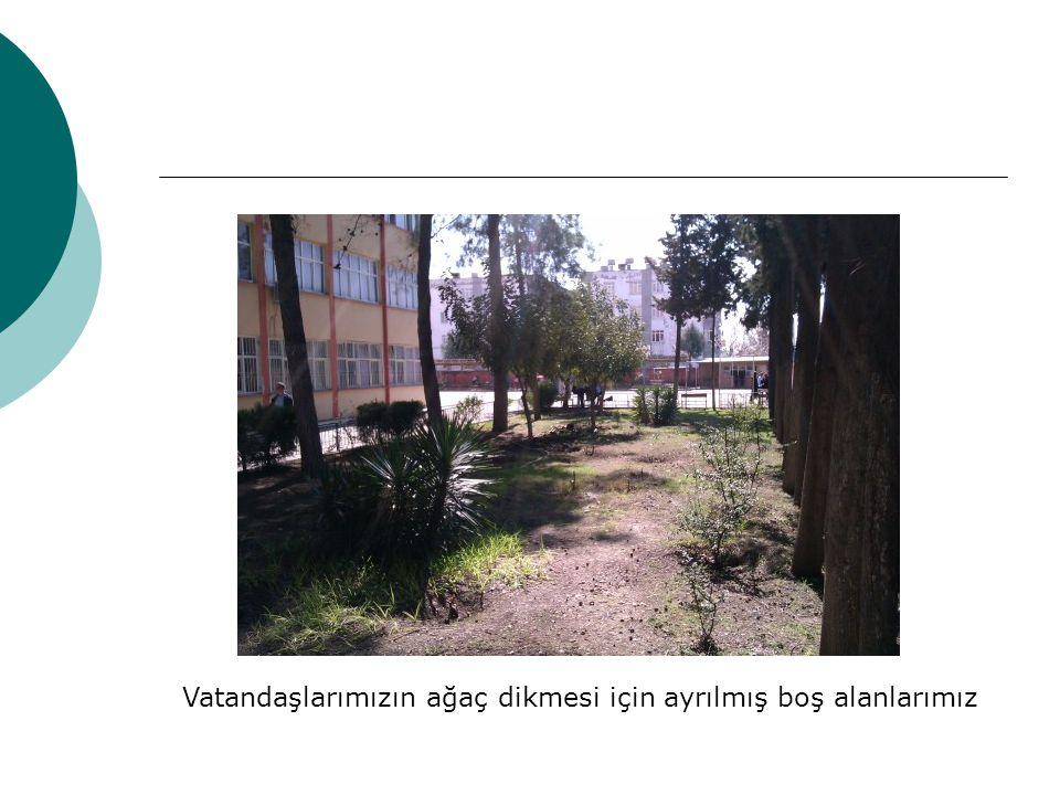 Vatandaşlarımızın ağaç dikmesi için ayrılmış boş alanlarımız