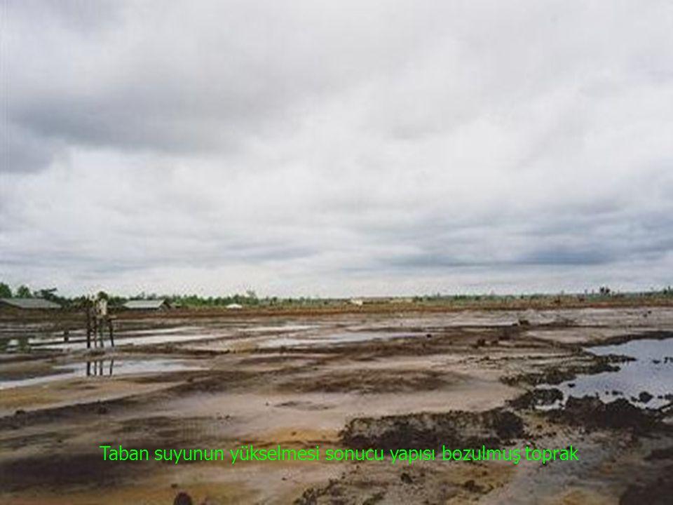 Taban suyunun yükselmesi sonucu yapısı bozulmuş toprak