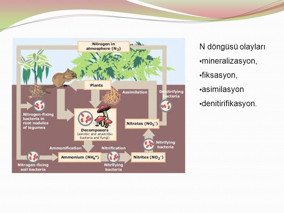 N döngüsü olayları mineralizasyon, fiksasyon, asimilasyon denitirifikasyon.