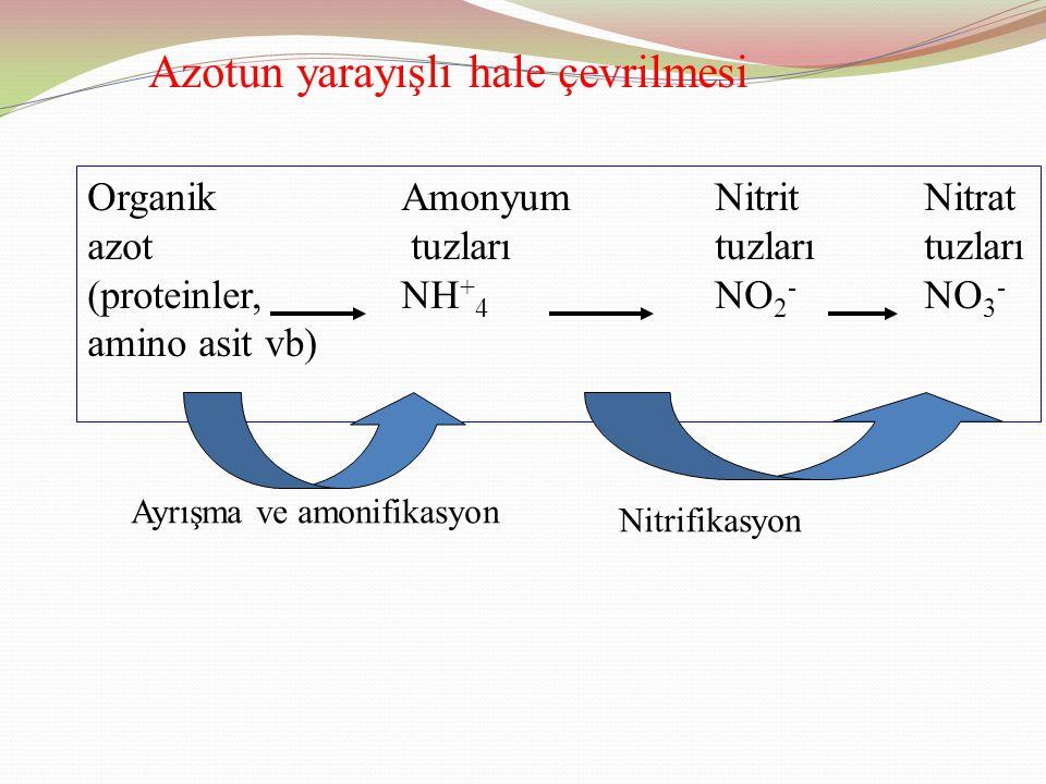 Azotun yarayışlı hale çevrilmesi Organik AmonyumNitritNitrat azot tuzları tuzlarıtuzları (proteinler,NH + 4 NO 2 - NO 3 - amino asit vb) Ayrışma ve amonifikasyon Nitrifikasyon