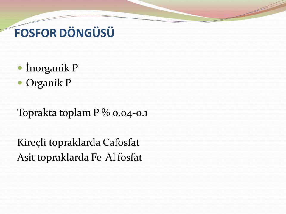 FOSFOR DÖNGÜSÜ İnorganik P Organik P Toprakta toplam P % 0.04-0.1 Kireçli topraklarda Cafosfat Asit topraklarda Fe-Al fosfat