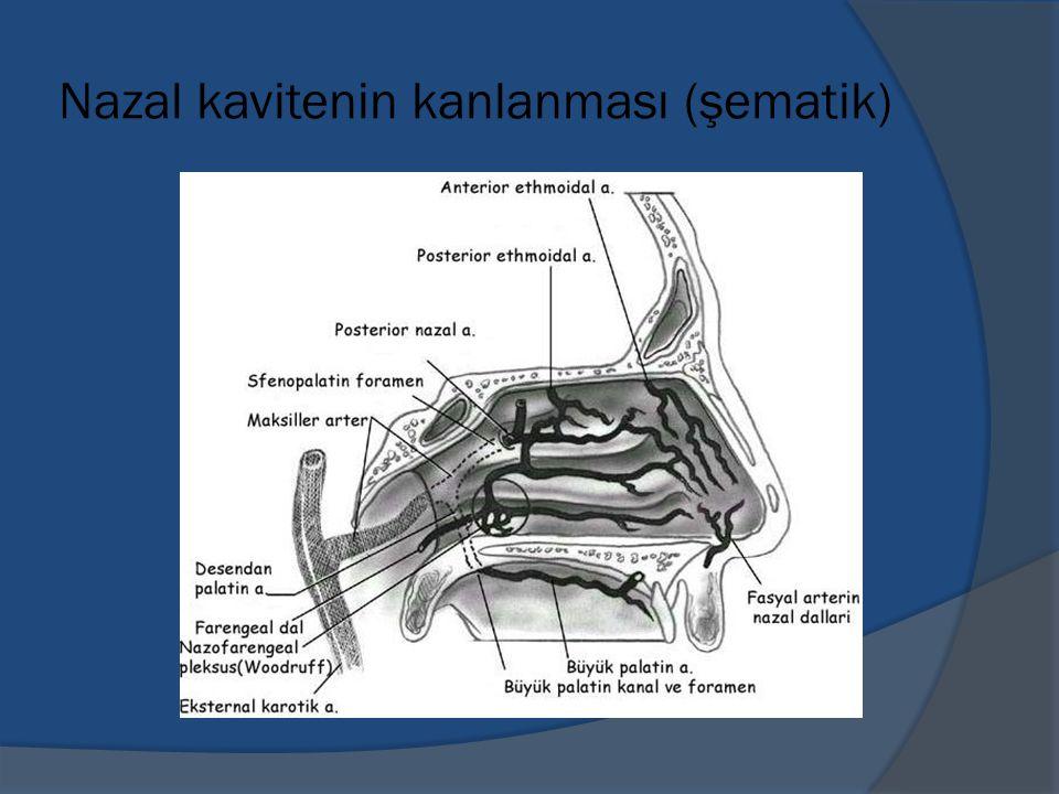 Nazal kavitenin kanlanması (şematik)