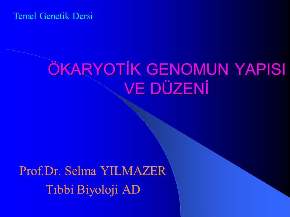 ÖKARYOTİK GENOMUN YAPISI VE DÜZENİ Prof.Dr. Selma YILMAZER Tıbbi Biyoloji AD Temel Genetik Dersi