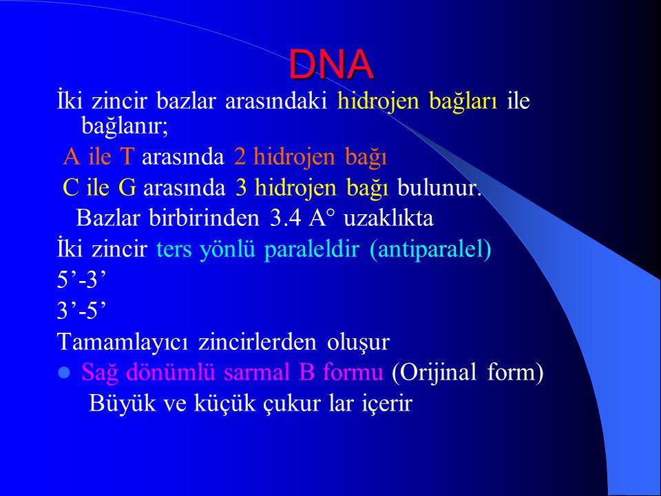 DNA İki zincir bazlar arasındaki hidrojen bağları ile bağlanır; A ile T arasında 2 hidrojen bağı C ile G arasında 3 hidrojen bağı bulunur. Bazlar birb