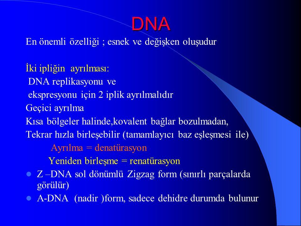 DNA En önemli özelliği ; esnek ve değişken oluşudur İki ipliğin ayrılması: DNA replikasyonu ve ekspresyonu için 2 iplik ayrılmalıdır Geçici ayrılma Kı
