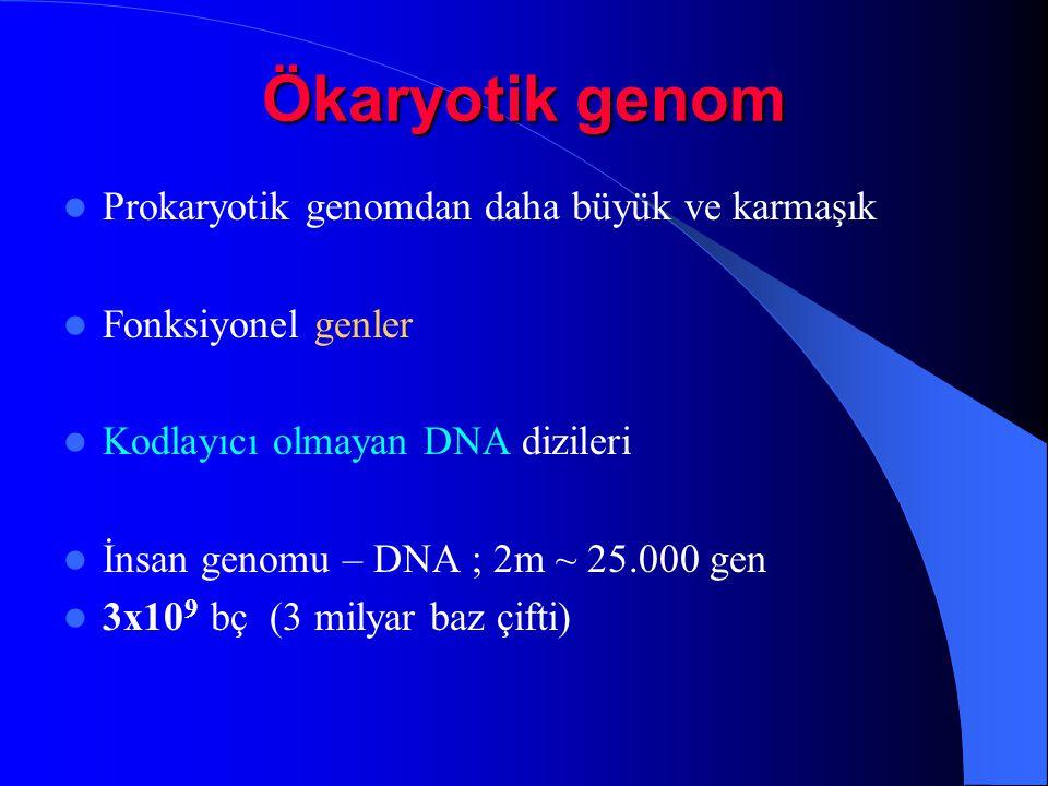 Ökaryotik genom Prokaryotik genomdan daha büyük ve karmaşık Fonksiyonel genler Kodlayıcı olmayan DNA dizileri İnsan genomu – DNA ; 2m ~ 25.000 gen 3x1