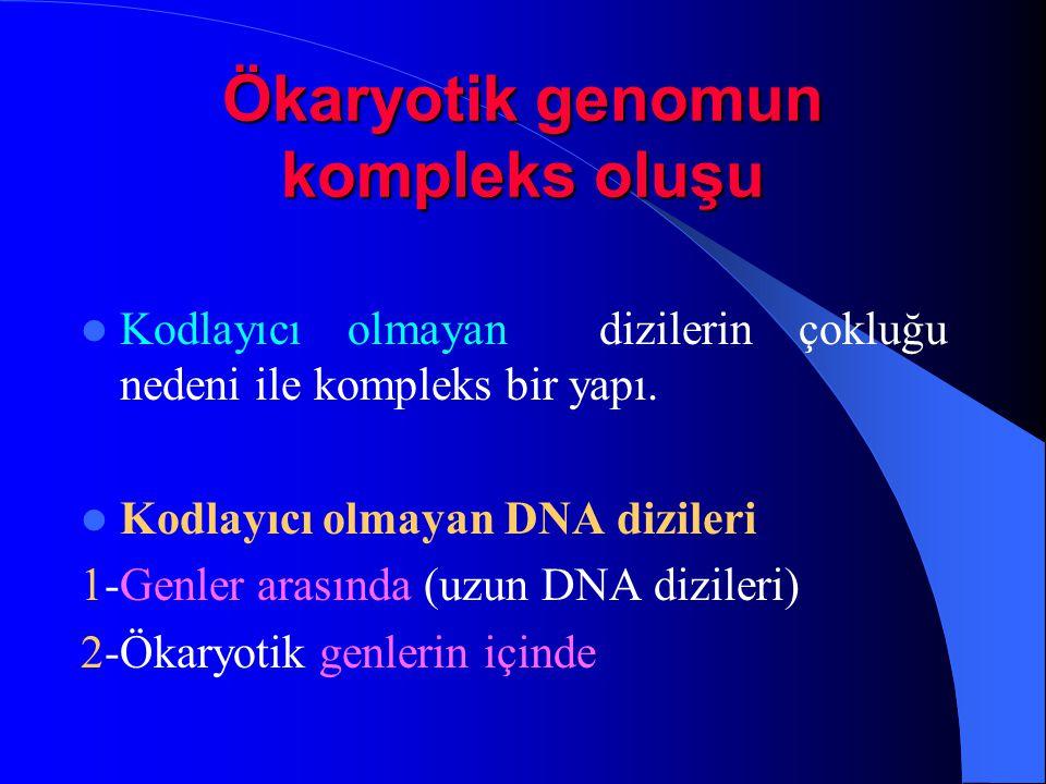 Ökaryotik genomun kompleks oluşu Kodlayıcı olmayan dizilerin çokluğu nedeni ile kompleks bir yapı. Kodlayıcı olmayan DNA dizileri 1-Genler arasında (u