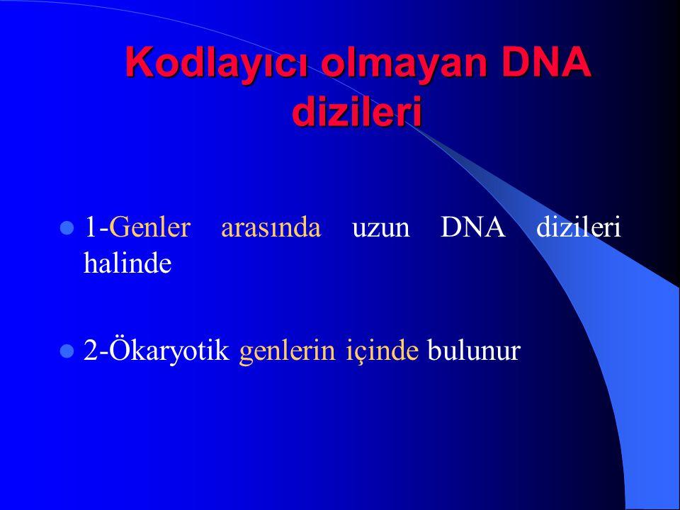 Kodlayıcı olmayan DNA dizileri 1-Genler arasında uzun DNA dizileri halinde 2-Ökaryotik genlerin içinde bulunur