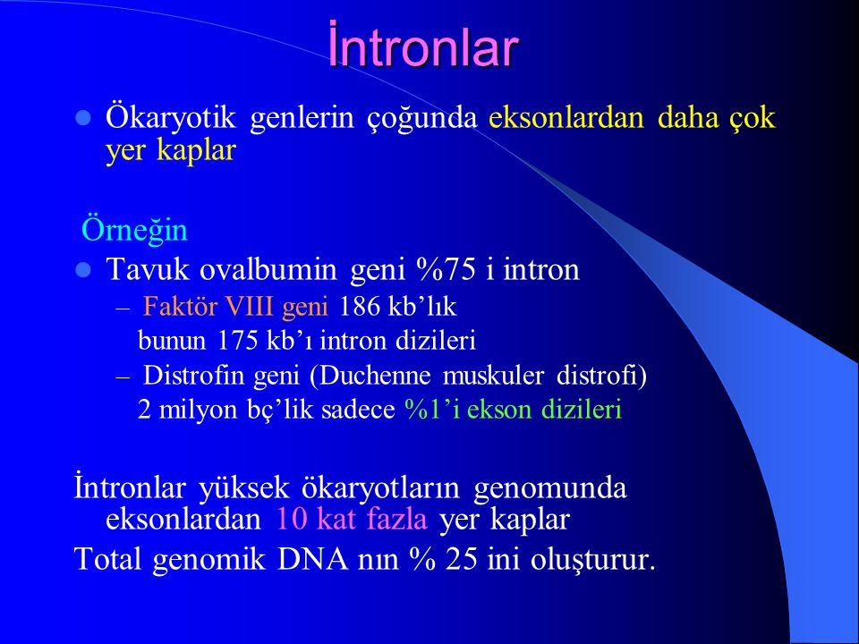 İntronlar Ökaryotik genlerin çoğunda eksonlardan daha çok yer kaplar Örneğin Tavuk ovalbumin geni %75 i intron – Faktör VIII geni 186 kb'lık bunun 175