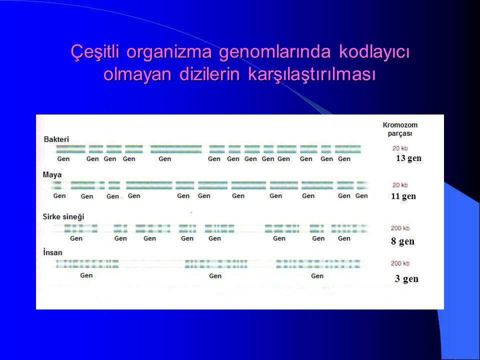 Çeşitli organizma genomlarında kodlayıcı olmayan dizilerin karşılaştırılması 13 gen 11 gen 8 gen 3 gen