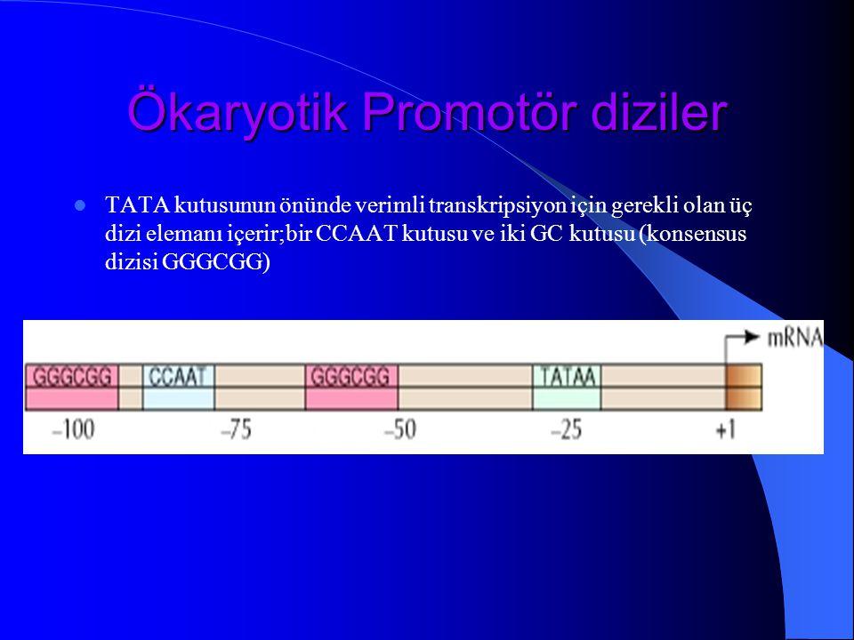 Ökaryotik Promotör diziler TATA kutusunun önünde verimli transkripsiyon için gerekli olan üç dizi elemanı içerir;bir CCAAT kutusu ve iki GC kutusu (ko
