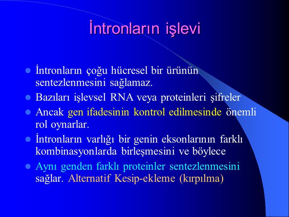 İntronların işlevi İntronların çoğu hücresel bir ürünün sentezlenmesini sağlamaz. Bazıları işlevsel RNA veya proteinleri şifreler Ancak gen ifadesinin