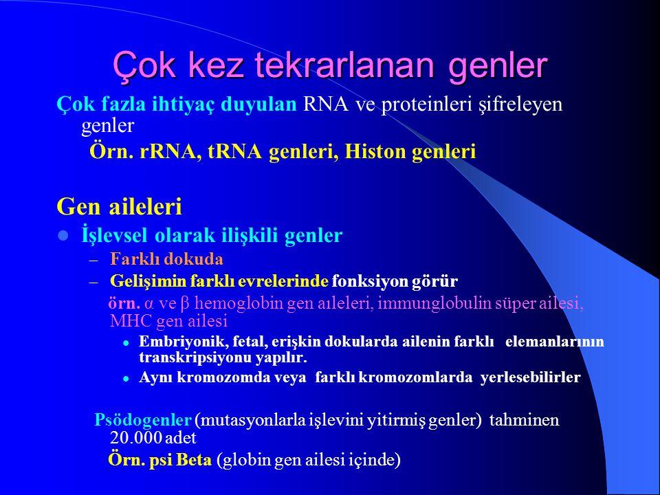 Çok kez tekrarlanan genler Çok fazla ihtiyaç duyulan RNA ve proteinleri şifreleyen genler Örn. rRNA, tRNA genleri, Histon genleri Gen aileleri İşlevse